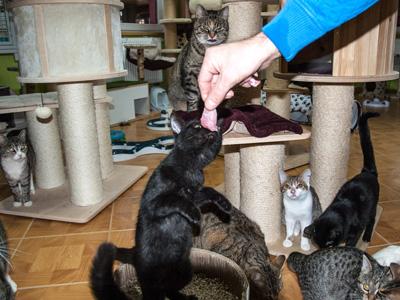 Kočičí domov Sluníčko - Foto 4