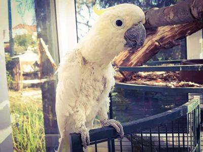 Pomozte s námi papouškům z Laguny - Foto 3