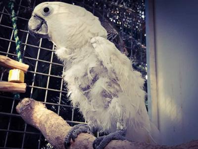 Pomozte s námi papouškům z Laguny - Foto 4