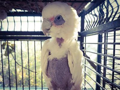 Pomozte s námi papouškům z Laguny - Foto 5