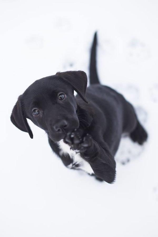 Pro psí voči - Foto 4