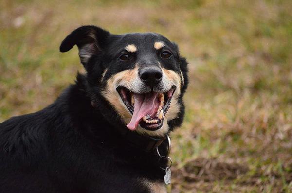 Pro psí voči - Foto 3