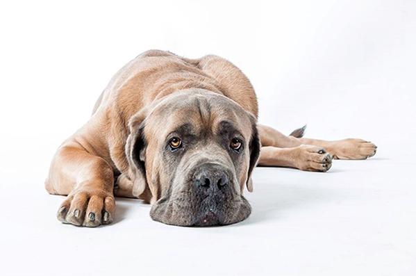 Pro psí voči - Foto 1