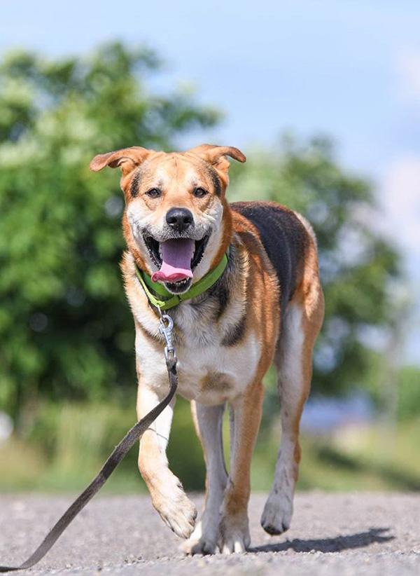 Pro psí voči - Foto 5