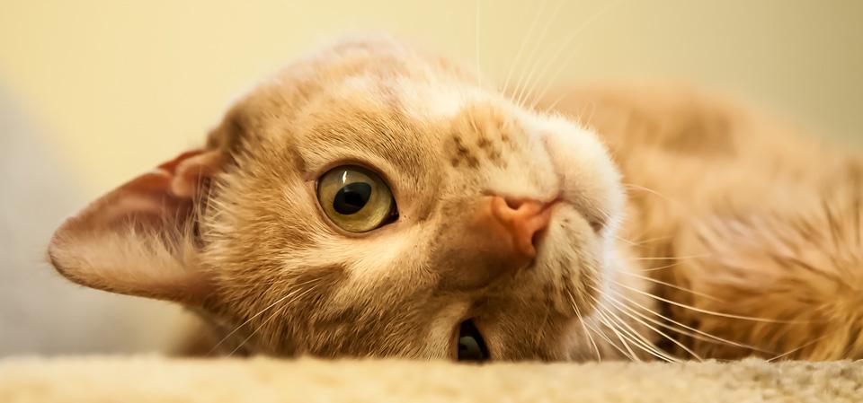 Desiatky mačička