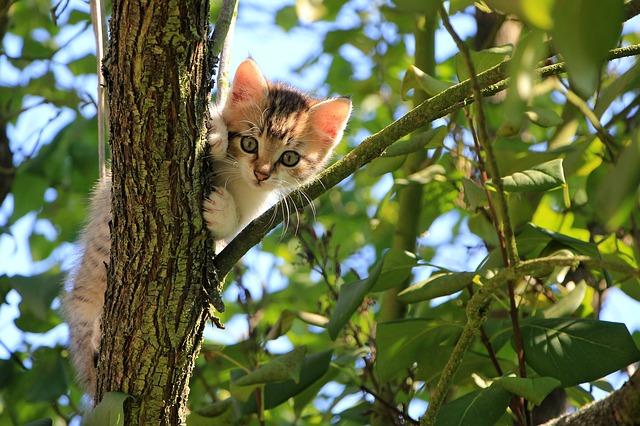 kotě musí zdravě růst