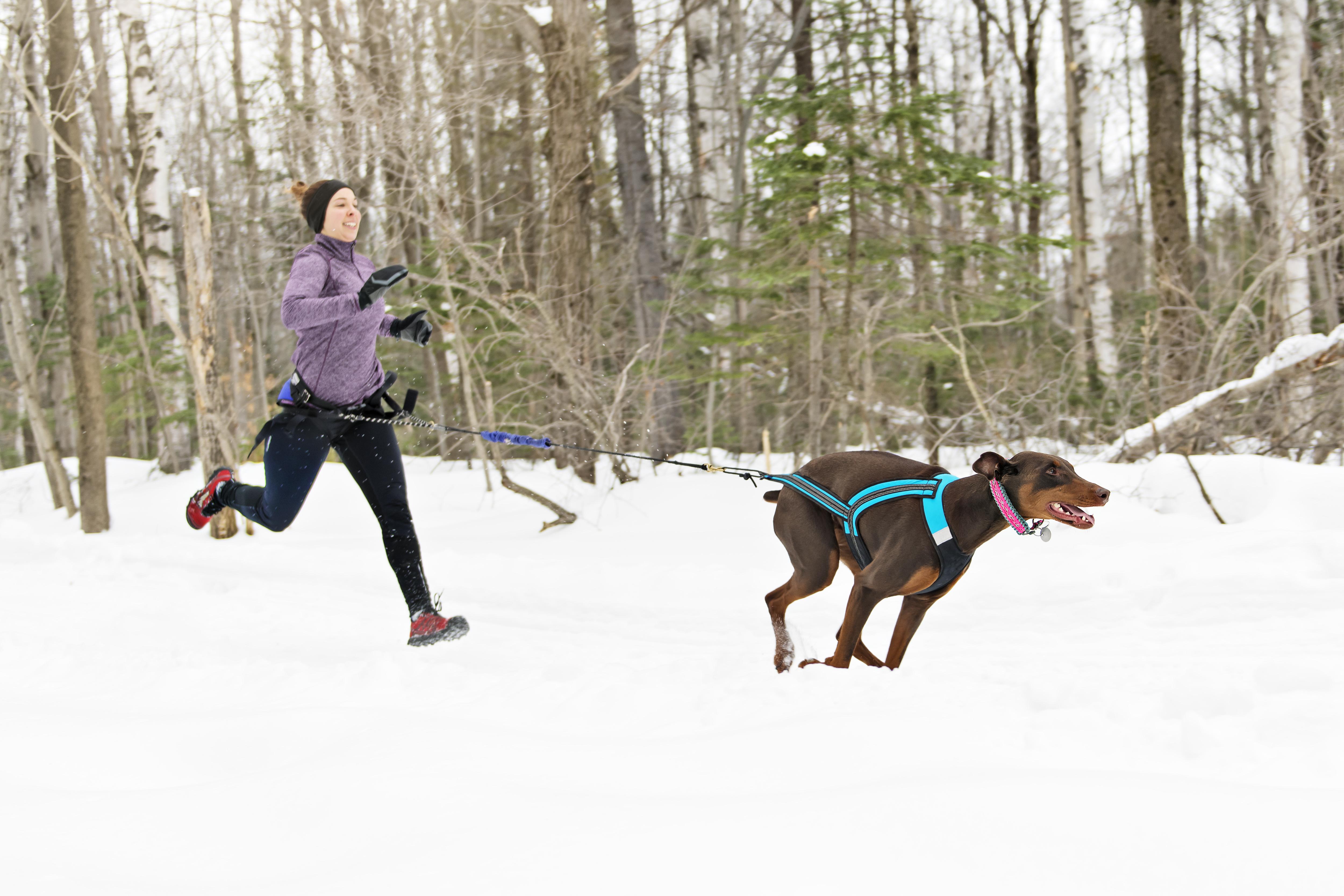 Běhání se psem v zimě
