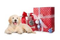 Vánoční balíčky pro zvířátka