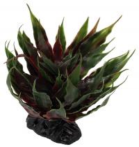 Rostliny do terária