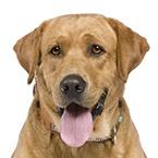 Granule pro dospělé psy