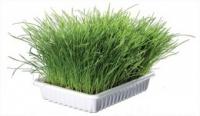 Trávy a bylinky pro kočky