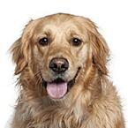 Pro starší psy