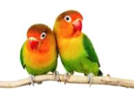 Vánoční dárky pro ptáky