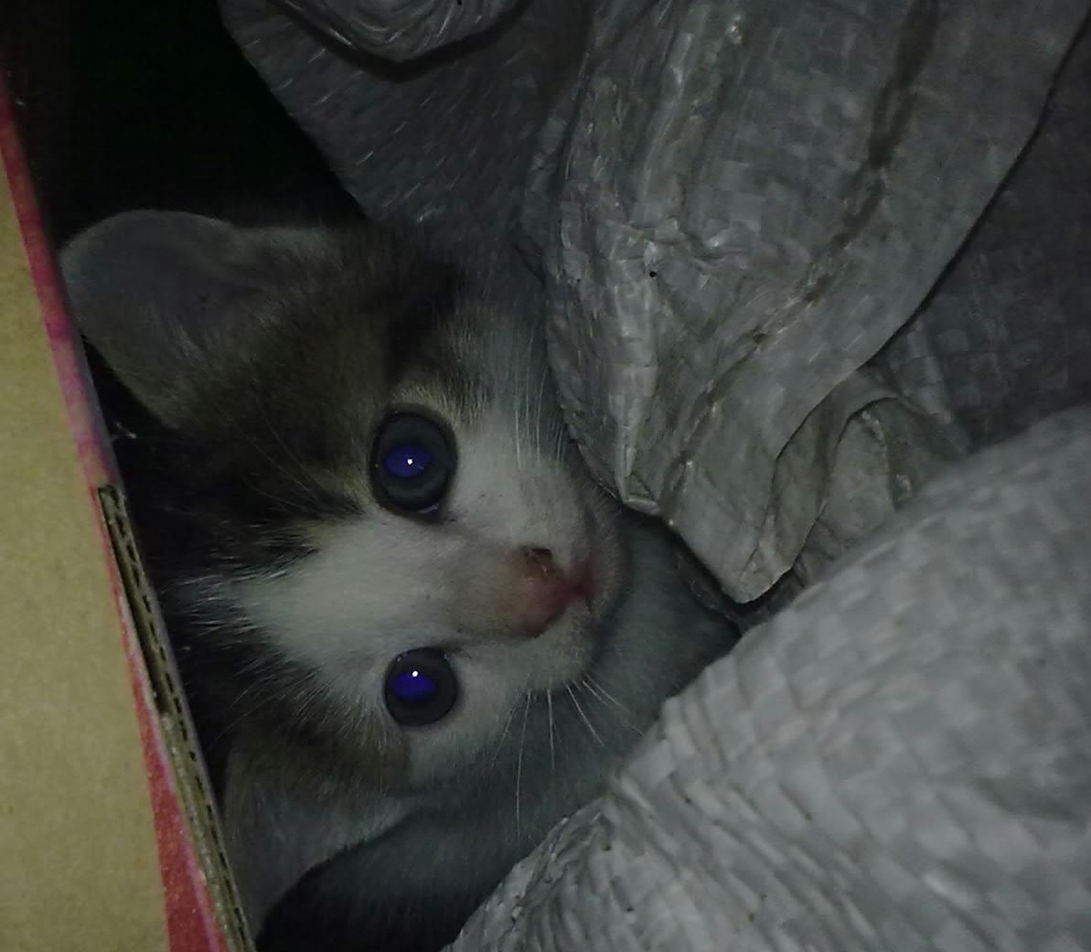 mame malé kočki!