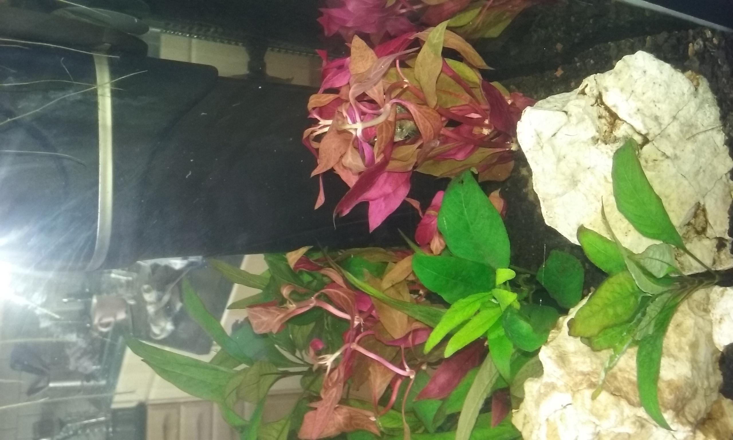 Nové rostliny