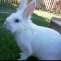 Sisi Jenifer RabbitWorld