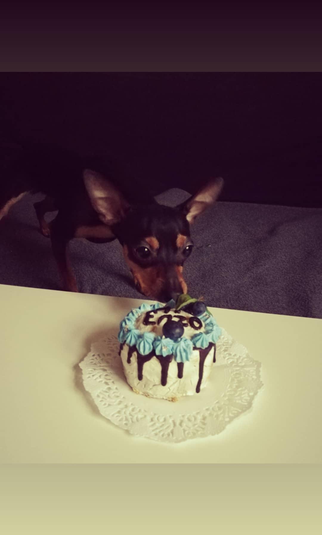 Enzika první narozeniny:-)