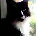 Arwenka of Pikcats.cz