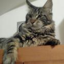 Cedrik of Pikcats.cz