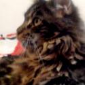 Cicero of Pikcats.cz