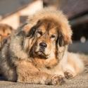 Daiquiri Bubbledog