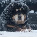 Glorie Bubbledog
