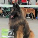 Mescalero Dog Arabat - Mesy title=