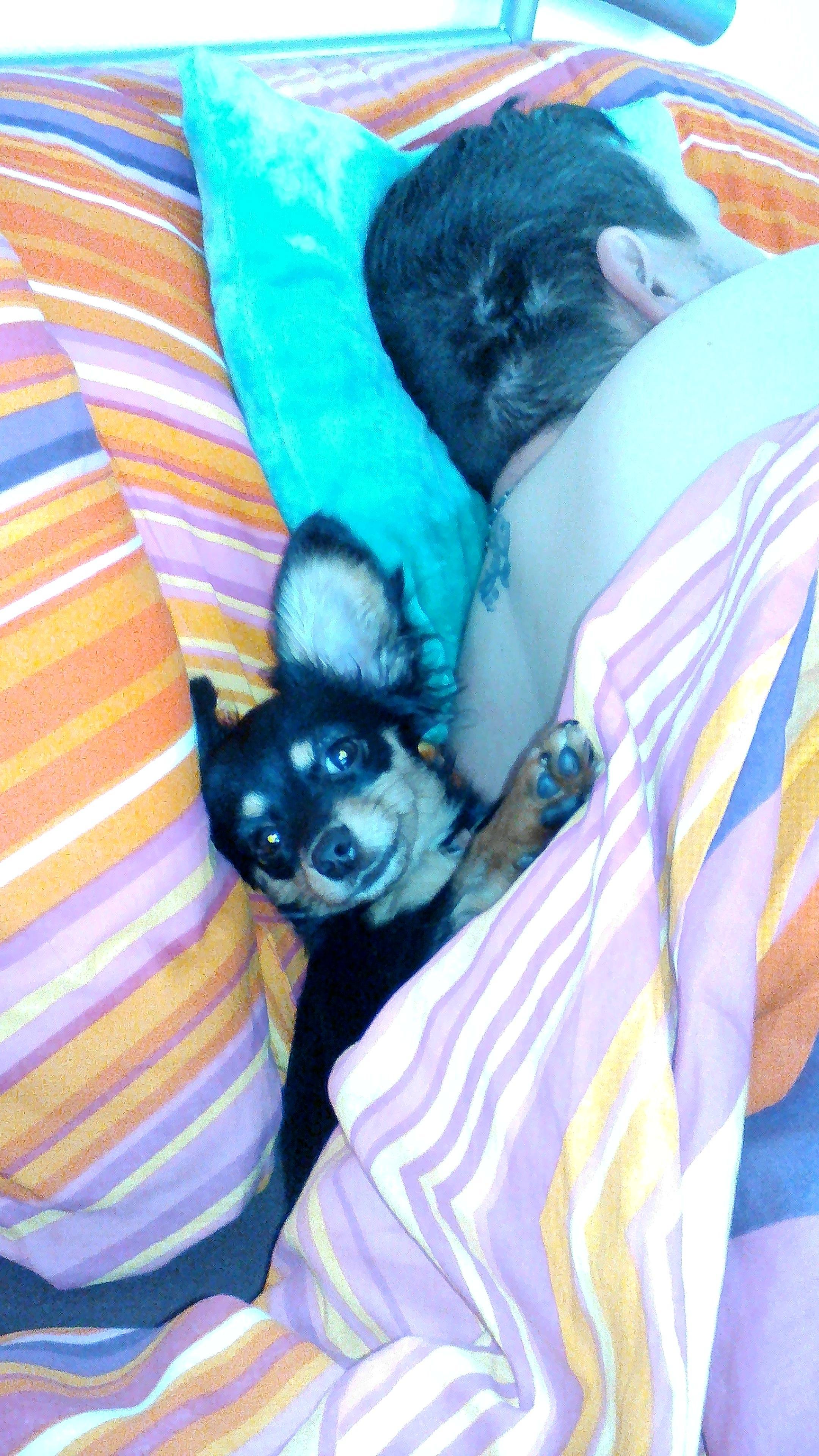 Takhle krásně spím s páníčkem a paničkou které moc miluju moje rodiče
