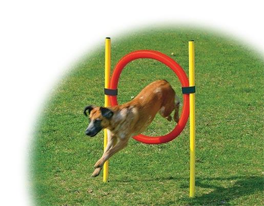 Set proskakovací DOG FANTASY Agility