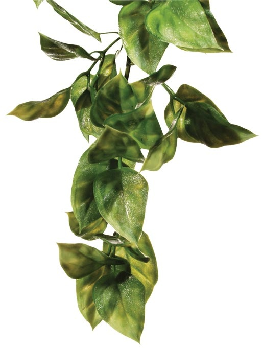 Rostlina EXO TERRA Amapallo malá 32 cm