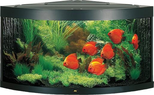 Akvárium set JUWEL Trigon 350 černé 350l