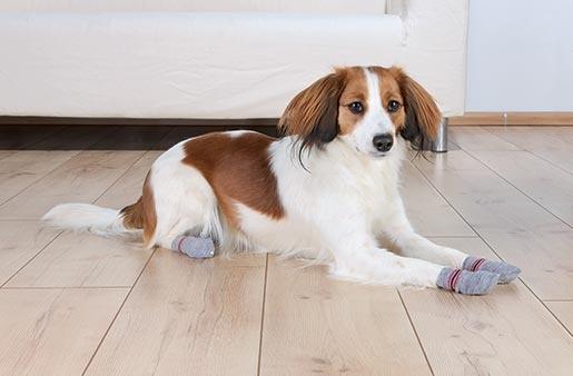 Ponožky pro psy Trixie M-L protiskluzové šedé 2ks