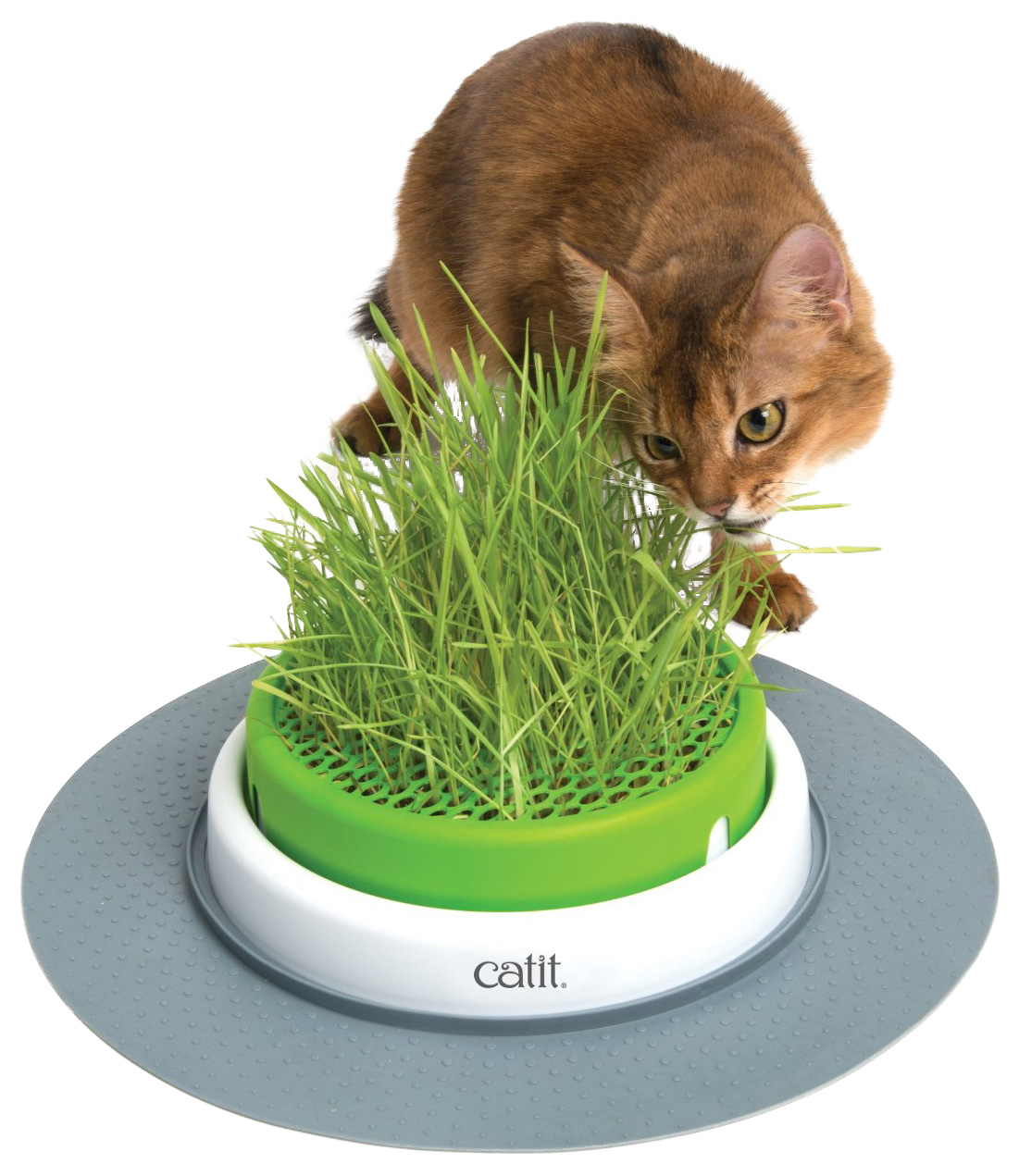 Cat It Catit Senses 2.0 Grass Planter