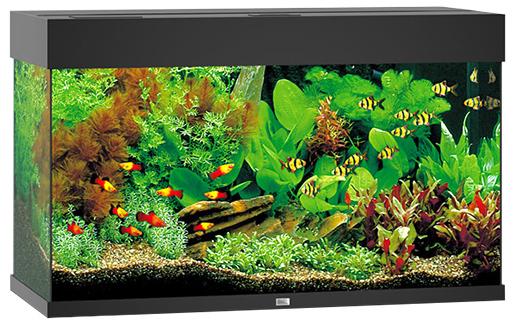 Akvárium set JUWEL Rio LED 125 černé