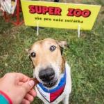 Zúčastnili jsme se největšího psího fesťáku Dog Fest 2018!