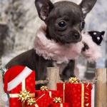 Přes 1 000 000 Kč pro útulky ve vánoční sbírce!