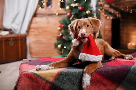 Návod na klidné Vánoce a Silvestr