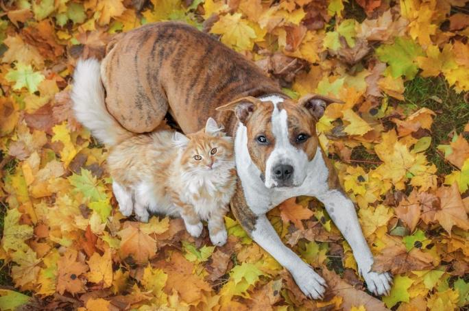 Vliv podzimního počasí na zdraví vašich zvířátek