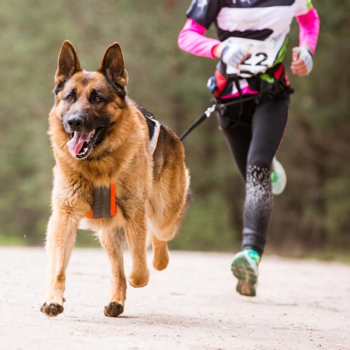 Jak běhat se psem
