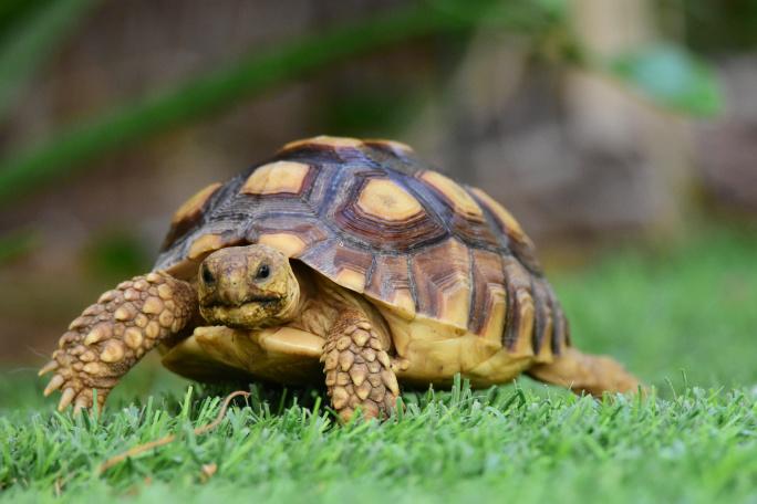 Jak chovat želvu zelenavou
