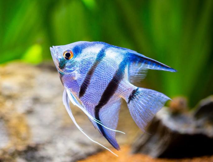 Výběr vhodného krmení pro jednotlivé druhy ryb
