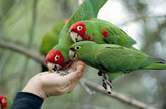 Výběr krmiva pro ptactvo