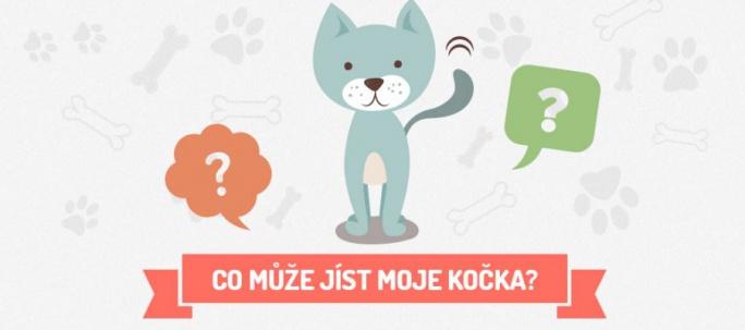 Co může jíst moje kočka - Infografika