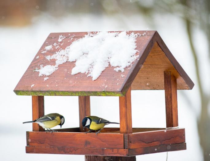 Krmení ptáčků v zimě