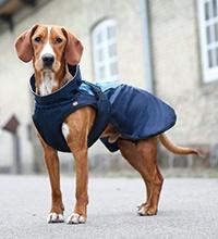 Jak vybrat ten správný obleček pro psa