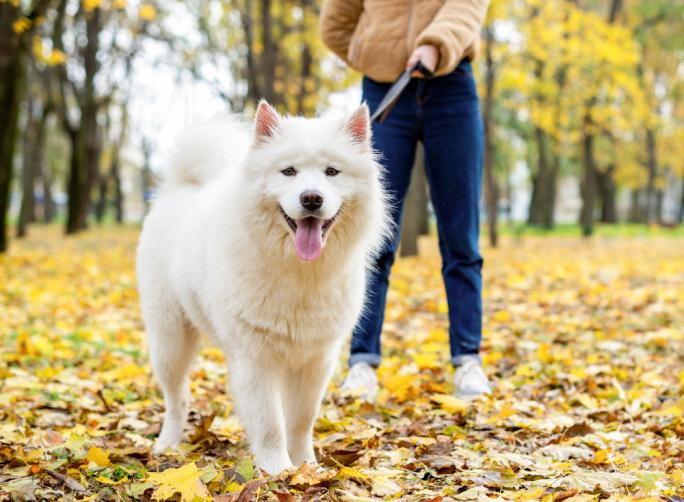 Jak na podzimní venčení vašich zvířátek